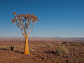 Aloe tree quiver in fish river canyon national park namibia Stock Photos