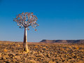 Aloe tree quiver in fish river canyon national park namibia Stock Photography