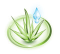 Aloe vera with droplets plant blue glossy in green circles Royalty Free Stock Photos