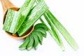 Aloe vera fresh leaf.