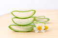 Aloe vera fresh leaf water can help neutralize free radicals and with white flower Stock Photo