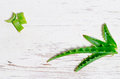Aloe vera juice with fresh leaves Royalty Free Stock Photography
