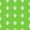 Aloe vera pattern seamless with special design Stock Photography
