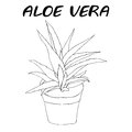 Aloe vera plant outline in flower pot. Royalty Free Stock Photo