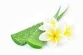 Aloe vera and plumeria. Royalty Free Stock Photo