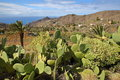 ALOJERA, LA GOMERA, SPAIN: Alojera with mountains, palm trees and terraced fields and cactus plants in the foreground Royalty Free Stock Photo