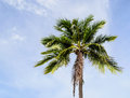 Alone coconut tree photo taken on Royalty Free Stock Photos