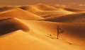 Alone in the desert Royalty Free Stock Photography