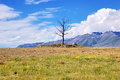 Alone and leafless tree rises a lone on the wasteland horizon in a hard sunny day Royalty Free Stock Photos
