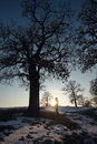 Alone man under big tree in winter Stock Photography