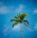 Alone Palm Tree Royalty Free Stock Photo