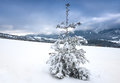 Alone pine tree in winter mountains on meadow Stock Images