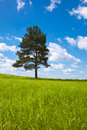 Alone tree in field Royalty Free Stock Images