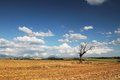 Alone tree in the field provence france harvested and alon Stock Images