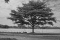 Alone tree in grass field near lake in public park. Royalty Free Stock Photo