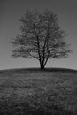 Alone tree on the meadow horizon in black and white Royalty Free Stock Image