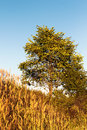 Alone tree in a meadow Royalty Free Stock Photo