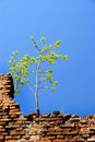 Alone tree on the wall Royalty Free Stock Photo