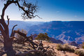 Along the edge of the Grand Canyon Royalty Free Stock Photography
