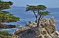 Along the mile drive view from pebble beach Stock Photos