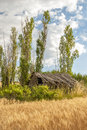 Along a wheat field is a barn with trees farm building and clouds Stock Photo