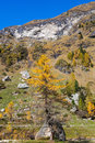 Alp view mountain in autumn an a larch tree Stock Image