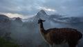 Alpaca at Machu Picchu Inca ruins in Peru Royalty Free Stock Photo