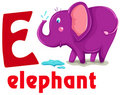 Alphabet animal E Images stock