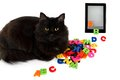 Alphabet and black cat with electronic book on white background. Royalty Free Stock Photo
