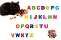 Alphabet  and black cat on white background. Royalty Free Stock Photo