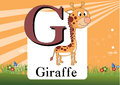 Alphabet g illustration of with giraffe Royalty Free Stock Photography