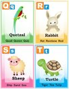 Alphabet learning book page animal with cute animals and capital and simple letters q r s t illustration specially for preschool Royalty Free Stock Images