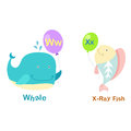 Alphabet Letter W-whale,,X-x-ray fish Royalty Free Stock Photo