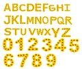 Alphabet A-Z , sunflower isolated on white background