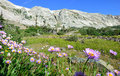 Alpine flowers in front of the Medicine Bow Mountains of Wyoming Royalty Free Stock Photo