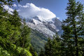 Alpine landscape summer forest and meadows beneath mont blanc Royalty Free Stock Photo
