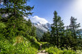 Alpine landscape summer forest and meadows beneath mont blanc Stock Image
