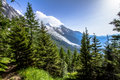 Alpine landscape summer forest and meadows beneath mont blanc Royalty Free Stock Photos