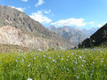 Alpine meadow in the fan mountains of Tajikistan Royalty Free Stock Photo