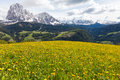 Alpine meadow with yellow dandelions flowers beautiful peaceful scene in the italian dolomites mountains on a sunny day passing Stock Image