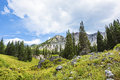 Alpine Meadows at Albion Basin, Utah Royalty Free Stock Photo