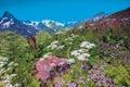 Alpine meadows on the mountain dombai ulgen russia karachay cherkessia Royalty Free Stock Photo