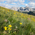 Alpine meadows Royalty Free Stock Photo