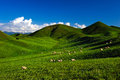 Alpine pastures Stock Images