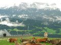 Alpine scene Royalty Free Stock Photo