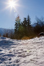 Alpine scene swiss alps pine trees snow and sun in the swiaa Royalty Free Stock Photography