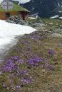 Alpine springtime Royalty Free Stock Photo