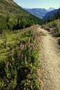 Alpine Trail Royalty Free Stock Photography