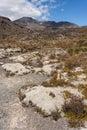 Alpine vegetation at Mount Tongariro Royalty Free Stock Photo
