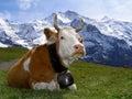 In the Alps Stock Photos